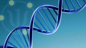 testatina_scienze_biologiche