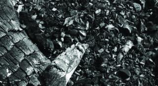 Il carbone vegetale che assorbe il grasso, come funziona e dove si trova
