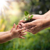 Come prendersi cura di una pianta